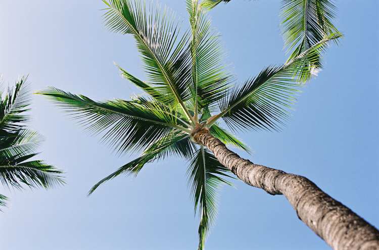 Maui Photographer (5)
