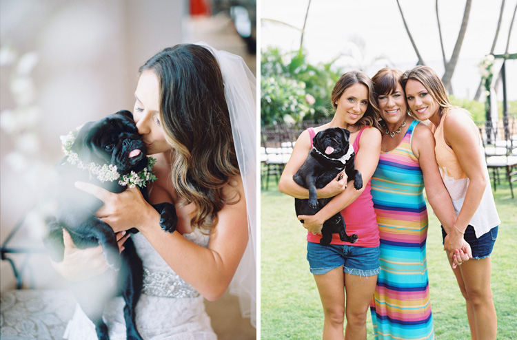 bride with pug images by maui photographer wendy laurel