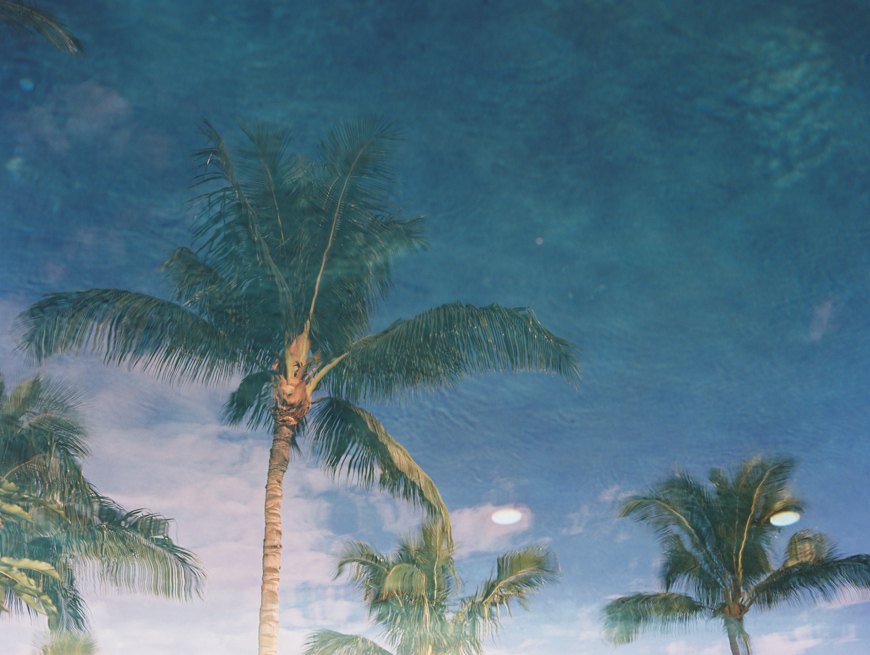 tropical palms reflected in water image by wendy laurel