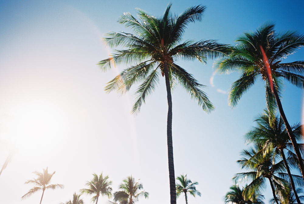 palm trees with sun flare by maui photographer wendy laurel