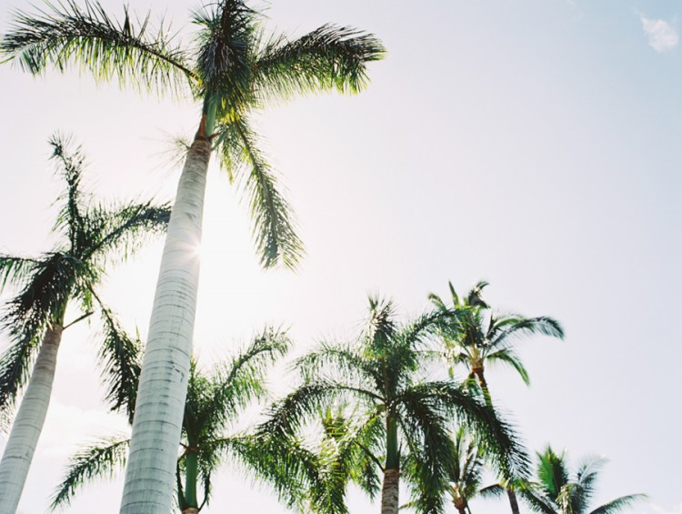 palm trees backlit image on medium format film by hawaii photographer wendy laurel-1