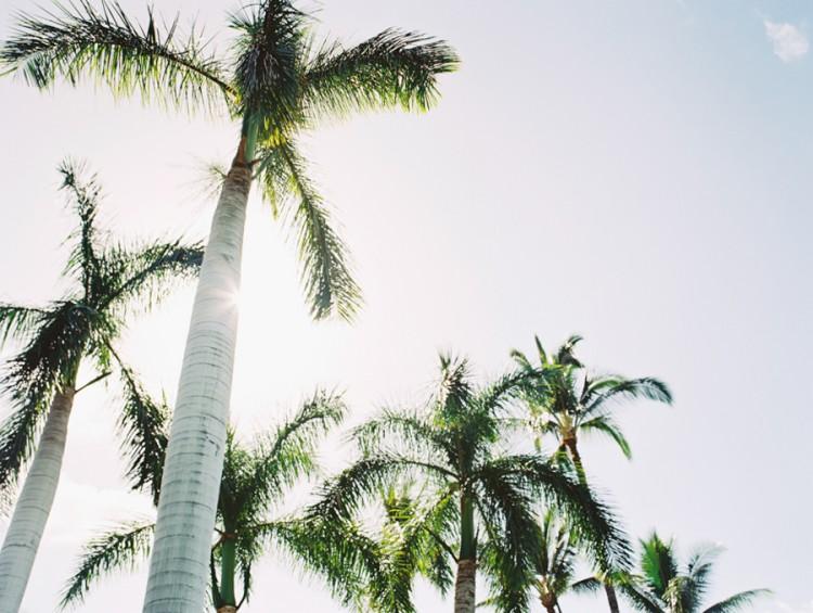 palm trees backlit image on kodak ektar medium format film by hawaii photographer wendy laurel-1